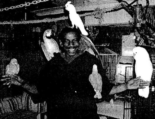 2002 – Christopher Driggens: Bird Man
