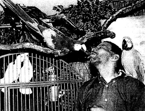 March 3, 2003 – Batty About Birds