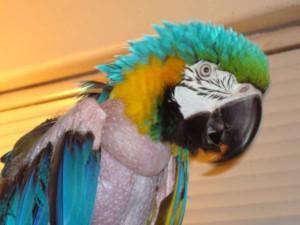 Neglected Parrots
