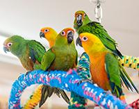 Bird Hut