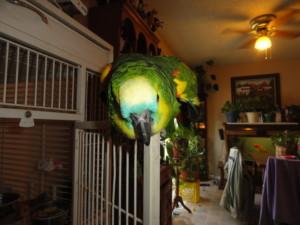 Flower Blind Amazon Parrot