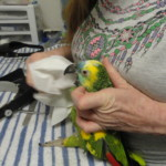 Parrot Perch Grooming