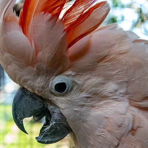 Parrot Healthy Diet