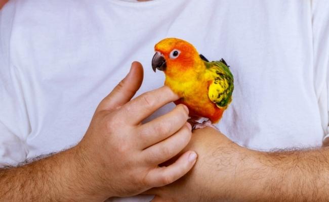 Rescued-Parrots