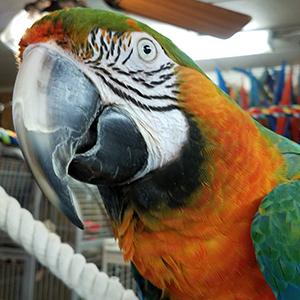 Rescued Parrots