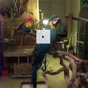 Inside Northwest Bird Rescue