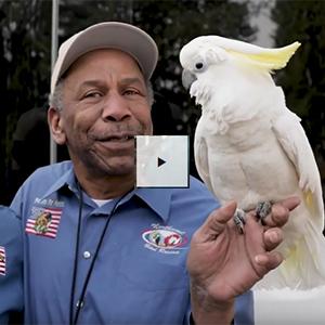 Parrot Rescue Videos