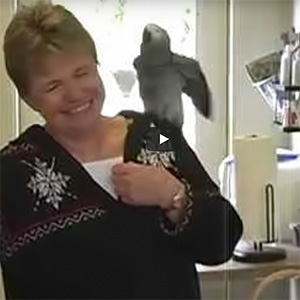 Therapy Parrot Videos