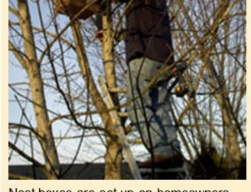 2007 December 10th Birdchannel.com Interviews Northwest Bird Rescue