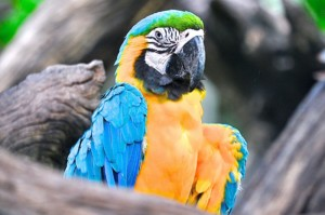 Why Parrots are Given Up