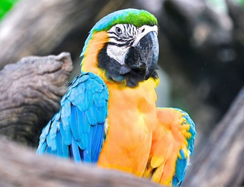 5 Reasons Why Exotic Birds Are Given Up