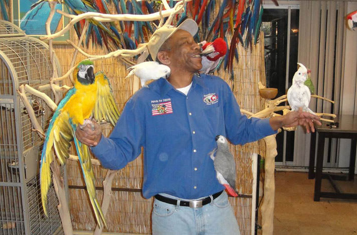 parrots-for-patriots-today
